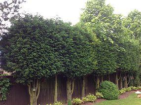 hedgework_1