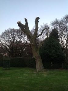 lichfield willow pollard